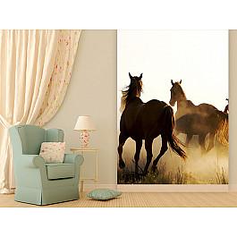 """Фотообои """"Лошади"""", 194*270 см"""