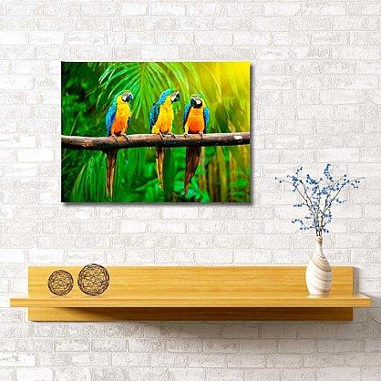 """Картина """"Тропические попугаи"""", 60*40 см (s-102052), фото 1"""