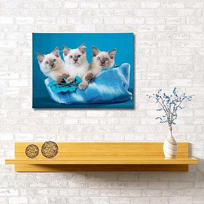 "Картина ""Три котенка"", 60*40 см (s-102054), фото 1"